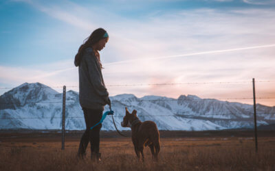 Work-Life Balance for Veterinarians – Can You Have It All?